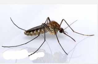 重庆灭蚊子