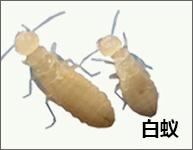 重庆灭白蚁